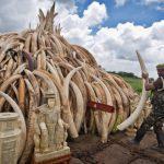 Ivory Pile